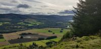 Some View Owl just North of Aberfeldy