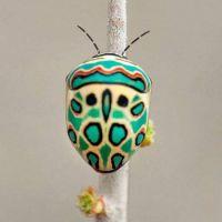 Zulu bug