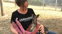 Kangaroos burnt in Fires in Australia
