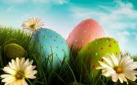 Daisies & Easter Eggs