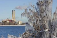 Ice covers plants in Marquette, Mich., in 2006.