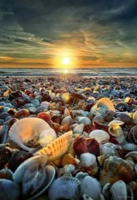 sunset and shells
