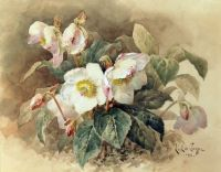 paul de longpre -Pink and white cyclamen