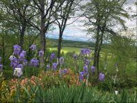 Blue ridge spring5