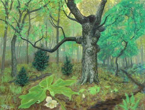 Mayapples on the Appalachian Trail, by Stephanie Thomas Berry
