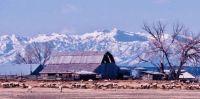 Sheep farm in Utah