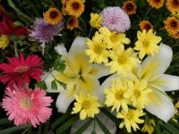 flowers for today - smaller
