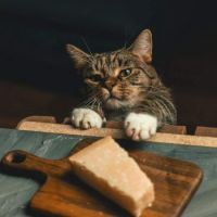 Our cat trying to steal cheese  (A.K.A. an Unexpected Art Lesson)