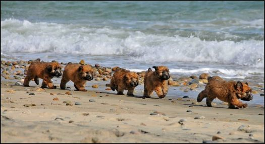 Write a Caption!  beach puppies