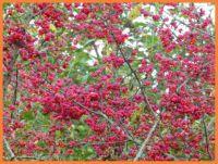 Herfst   Autumn.