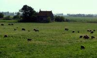 Eiland Tholen/ the isle of Tholen, Holland