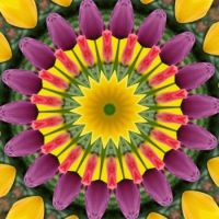 kaleidoscope 317 tulips again medium
