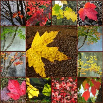 Autumn leaves mosaic by artistgal on flickr