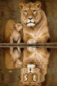lion and lion jr.