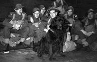 Gander-the war dog