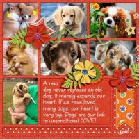 📷  Photos Cutie Pie Dogs & Puppies #2