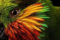 photo-ark-parrots-endangered-bird-world-intelligence-3.adapt.1900.1