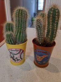 Cacti novelties