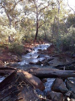 Lesmurdie Brook below Lesmurdie Falls (larger)