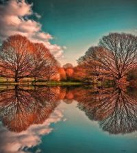 Reflection- Trees
