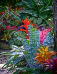 Tropical Color!