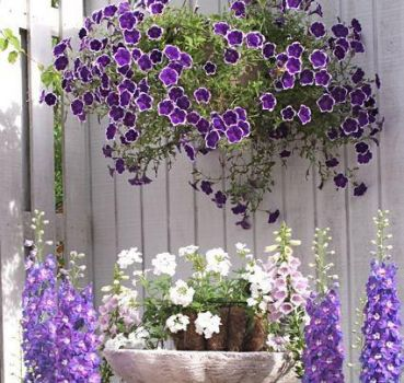 Love Purple...