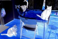 3 ghost cats