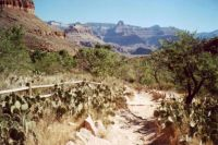 Indian Gardens on Bright Angel Trail, Grand Canyon, Arizona