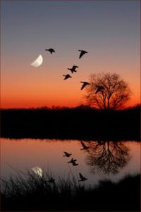 Wild Geese over a Moonlit lake/Majestic Earth