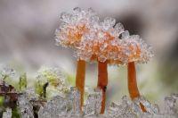 """""""Little Winter Wonderland"""""""