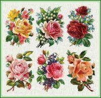 Beautiful Roses
