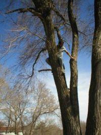 37 Treeclimber