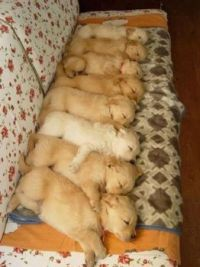 All in a row