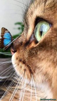 I Have A Butterfly on My Nose Today  :)