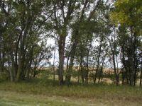 19 Nebraska grove