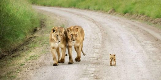 8  ~  'Little cub being most endearing & closely garded'  ~  Happy Mothersday!  :-)