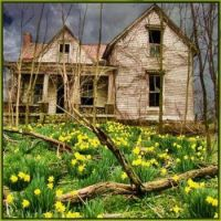 Old House With Daffodils