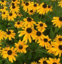 Flowers n Bees 2