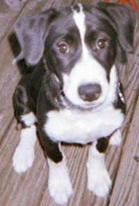 Lulu at 12 weeks