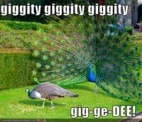 Peacock: Quagmire! The Bold Peacock!