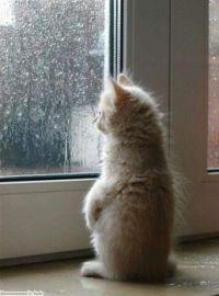 rain watching