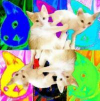 Def Jam Ice Cube Couch Potato Cat