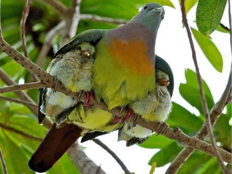 Mom and baby birds
