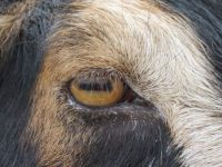Who/what does this eye belong to??