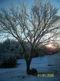 Back Tree