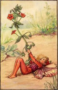 The Scarlet Pimpernel Fairy