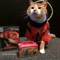 Cat Icon Game #54 - please identify!