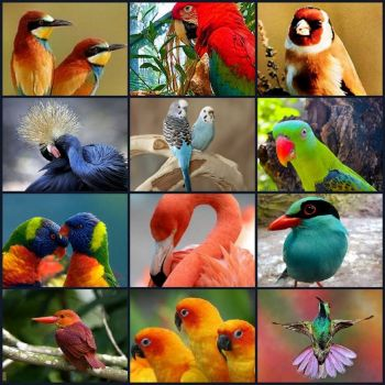 Theme:  Birds - larger