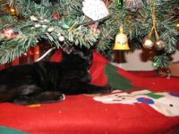 Nigel under the Christmas tree
