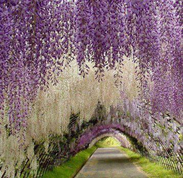 Kawachi Fugi Gardens. Kitakyushu, Japan